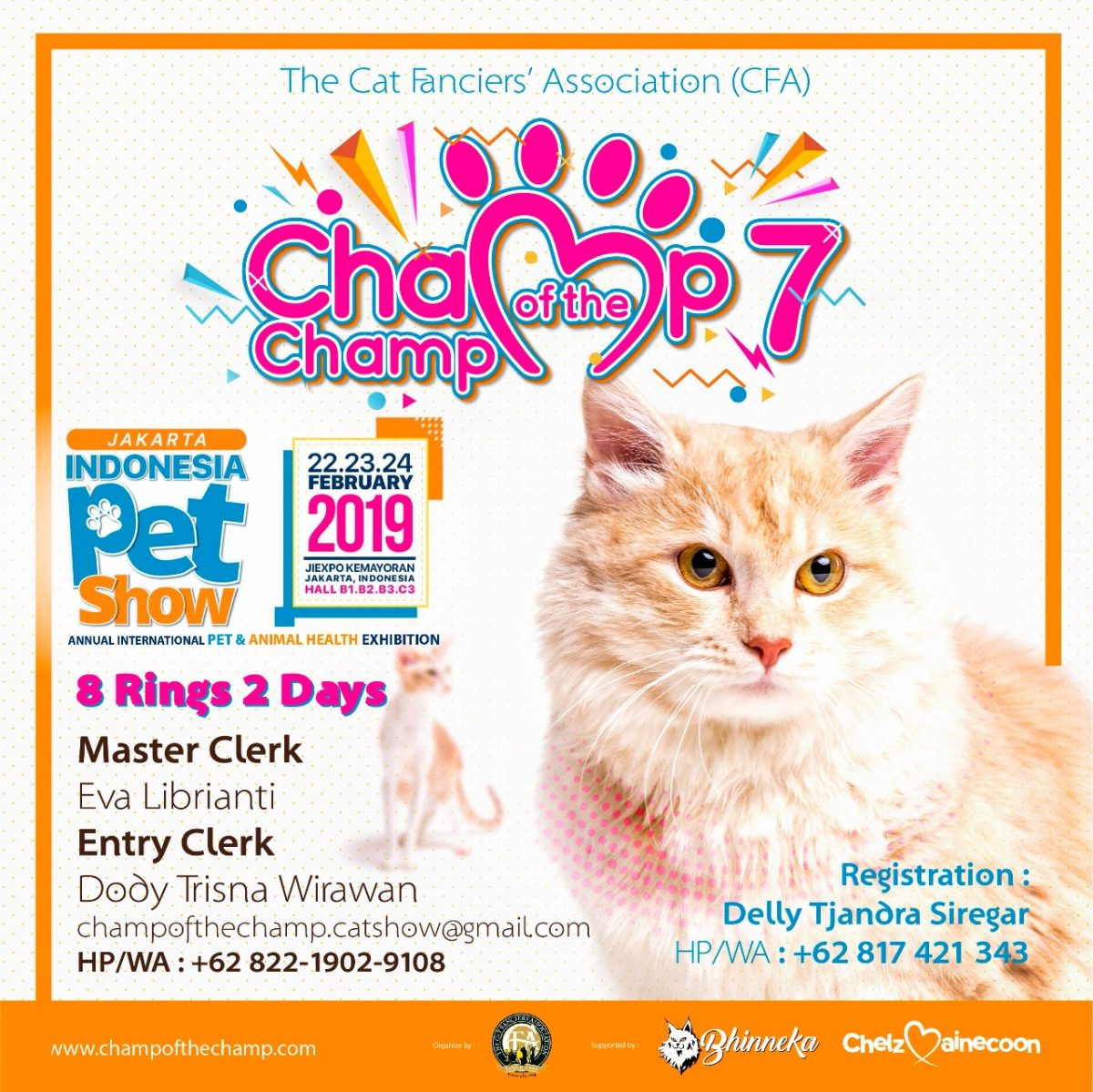 jual mainecoon, cattery mainecoon