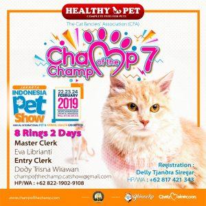 Chelz Maine coon kembali menyelenggarakan kontes kucing CFA show Champ Of The Champ ke 7