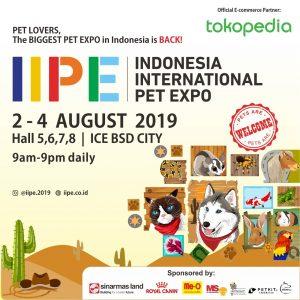 Chelz Mainecoon goes to Indonesia Internasional Pet Expo 2019
