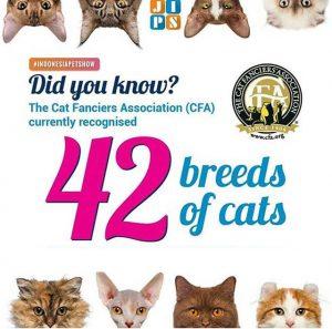 Breed Kucing yang Dapat Mengikuti Kompetisi CFA